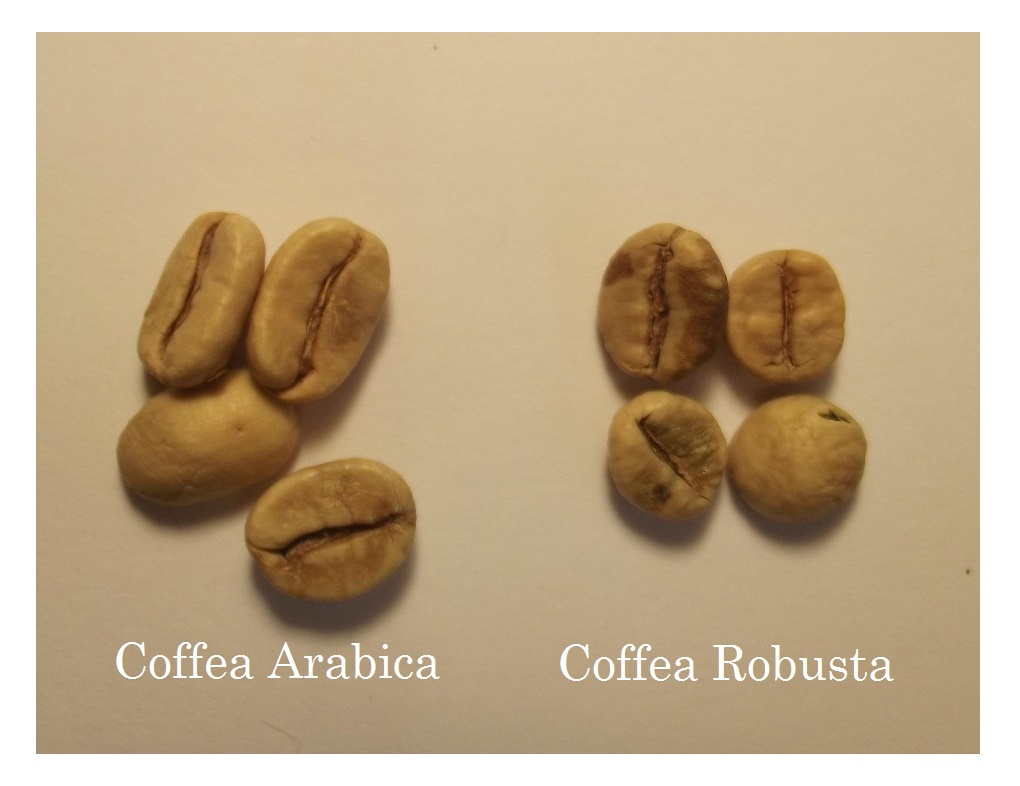 Arabica-and-Robusta