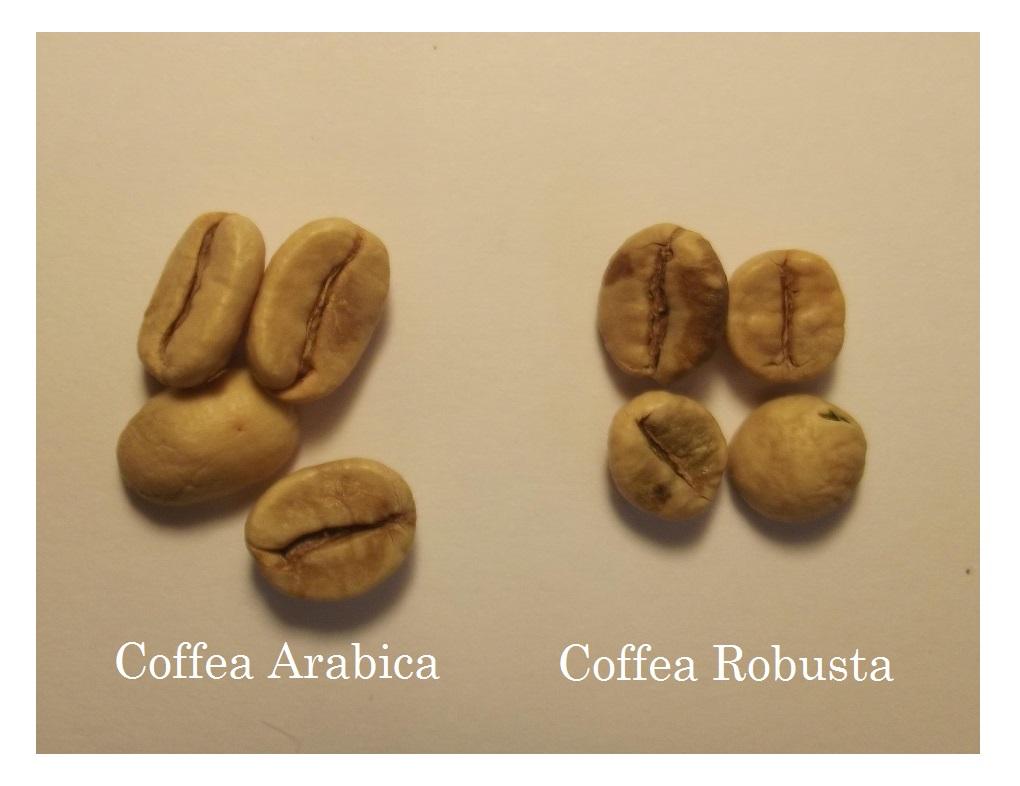 Arabica-and-Robusta