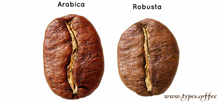 arabica-robusta-bean