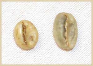 robusta-vs-arabica