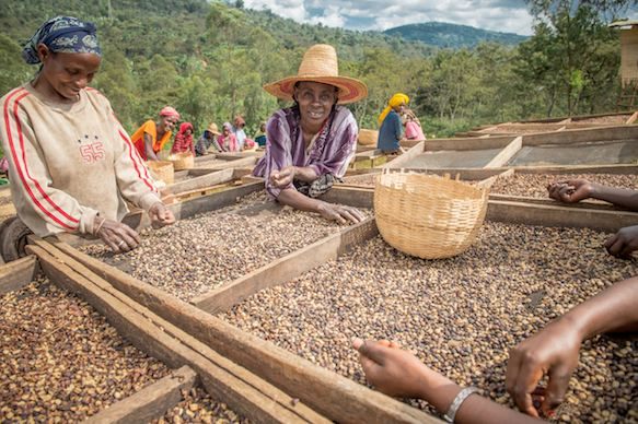 Ethiopia Coffee Trade