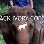 Elefánt ürülékből nyerik ki a világ egyik legdrágább kávéját